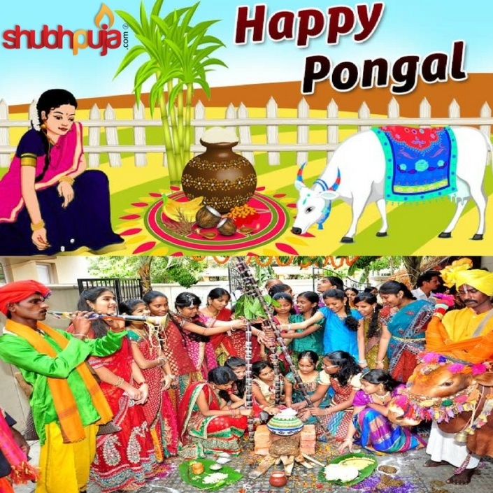 Shubhpuja.com wishing you a Happy Pongal